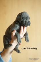 Lord Däumling_JB_66569