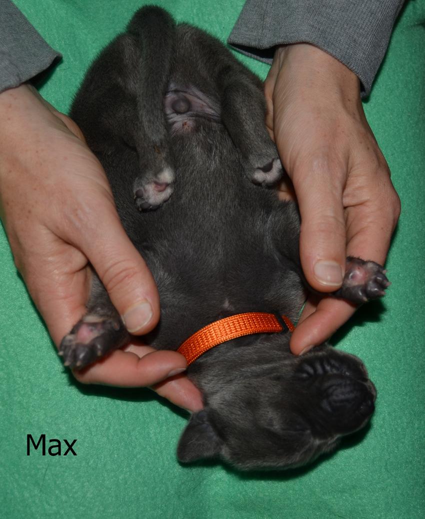 Max9022-Text