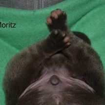 Moritz9040-Text